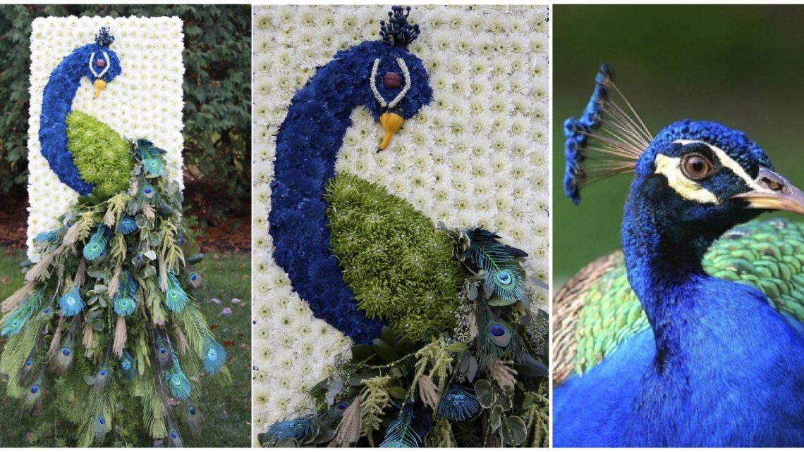 Peacock Wedding Theme Custom Event Design
